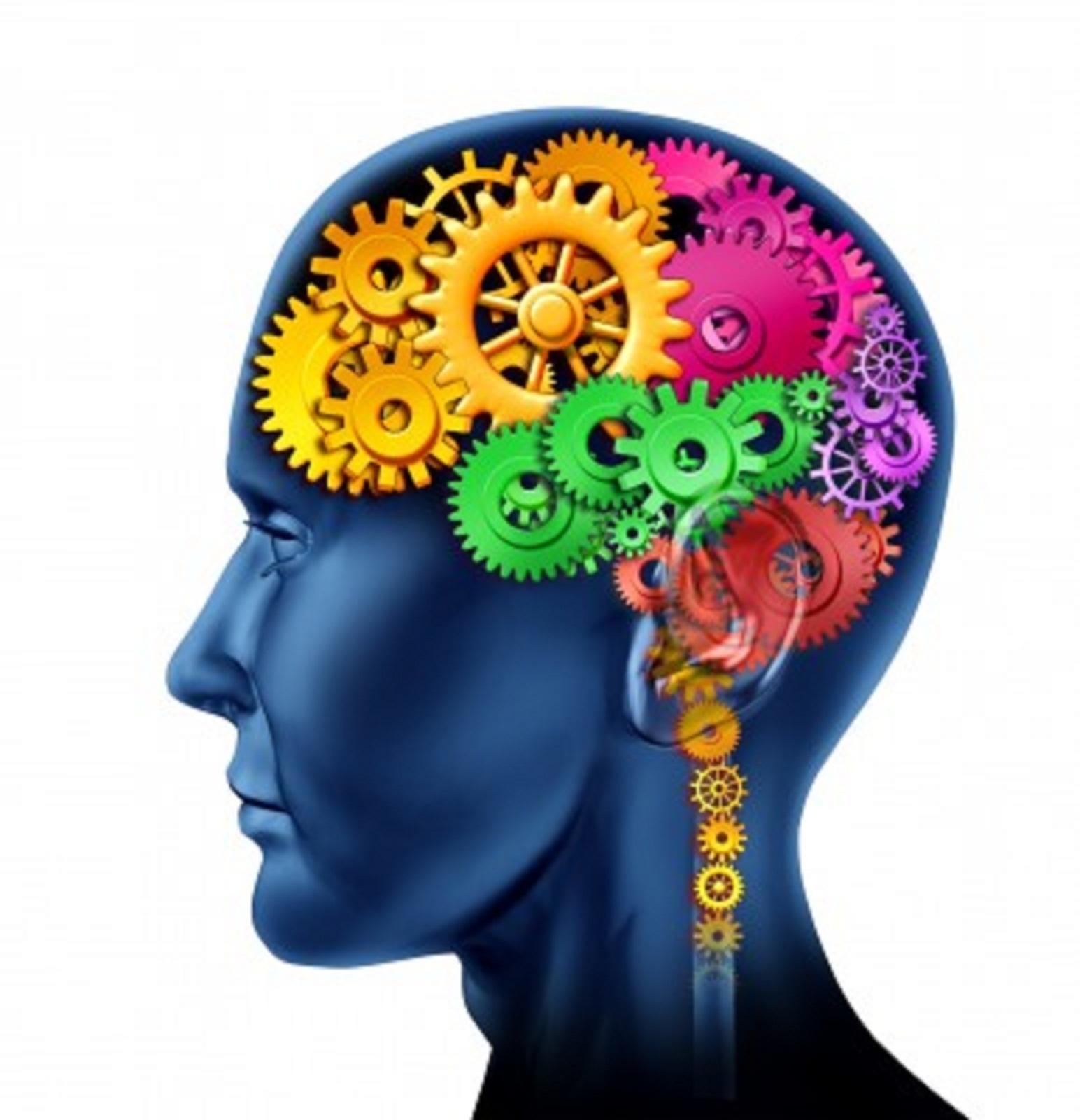 brain4.jpg